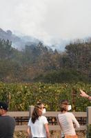 米カリフォルニア州ソノマ郡のブドウ畑の向こう側で続く山火事の消火作業をマスク姿で見守る人たち=12日(共同)