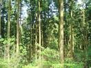 多良岳の県有林「森林認証」 五輪活用目指す