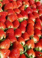 収穫したばかりのイチゴ新品種「いちごさん」。朝日を浴びて輝く=15日朝、佐賀市三瀬村