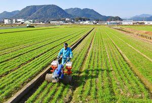 青空の下、麦踏みをする生産者。佐賀豪雨では一帯が冠水し、作物が被害を受けた=武雄市