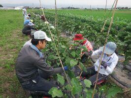 有機農業のノウハウを学ぶ参加者ら=佐賀市巨勢町(佐賀市提供)