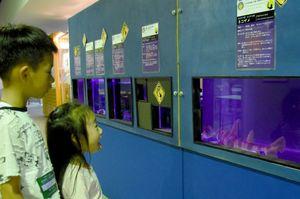 「背びれに毒がある」ネコザメに見入る子どもたち=武雄市の宇宙科学館