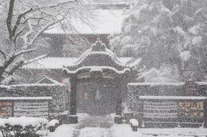 強風で木々の粉雪が舞い散る多久聖廟(午前10時半撮影)=多久市多久町