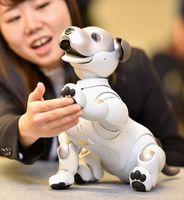 ソニーが発売した新しい犬型ロボット「aibo(アイボ)」=11日午後、東京都港区の同社本社