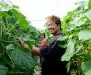 トレーニングファーム1期生、就農1年 環境制御技術生かし…