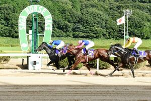 4番人気のサヴィがメイショウテンスイ、コパノキッキングらの猛追をかわして逃げ切った第20回サマーチャンピオン=鳥栖市の佐賀競馬場