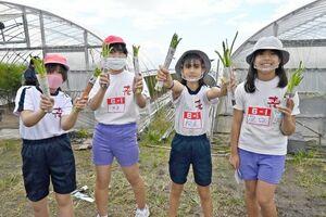 アスパラガスの収穫を楽しむ本庄小の児童たち=佐賀市のアスパラガス畑
