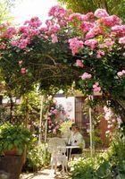 色鮮やかなバラが咲き誇る古賀楯男さんの自宅=佐賀市巨勢町修理田