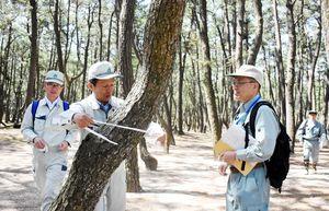 感染源になる枯死した松に目印のテープを巻く参加者=唐津市の虹の松原
