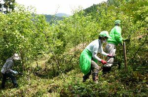 枝打ちや下草刈りに取り組むボランティア団体「SAGA森の案内人クラブ」メンバー=佐賀富士町