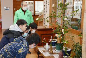 浦川友喜さん(奥)が展示しているさまざまなツバキに見入る児童たち=有田町の有田小