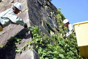 作業車を使って雑草を除去する参加者=佐賀市の佐賀城本丸歴史館