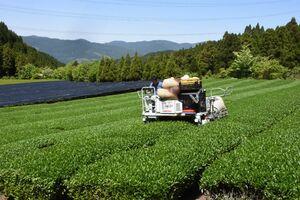 七山では最も標高の高い茶畑。茶摘機で収穫を終える農家たち=唐津市七山木浦