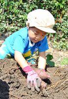 夢中でサツマイモを掘り起こす子ども=佐賀市鍋島5丁目の「子ども農園」