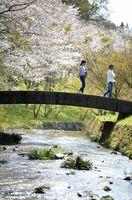 河内ダム(鳥栖市) 小川に架かる小さな石橋。岸の桜を眺めながら散策を楽しめる