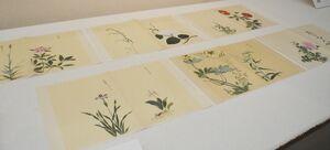 ダリアなど450余種の植物を描いた「植物絵図」