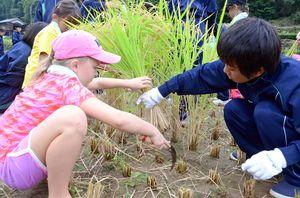 嬉野中の生徒から教わりながら稲を刈る米国の子ども=嬉野市嬉野町岩屋川内