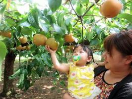 梨狩りが楽しめる観光農園