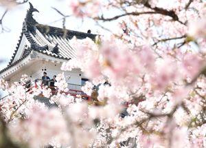 唐津城を彩る桜=唐津市東城内(3月31日撮影)