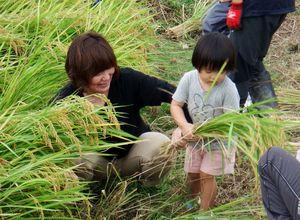 稲刈りを楽しむ参加者=佐賀市本庄町の江口農園