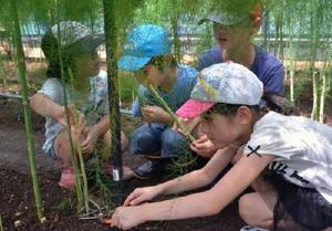 長さを確かめながらアスパラガスを収穫する児童=有田町戸矢