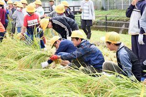 大嘗祭に献上する米を丁寧に刈り取る児童たち=基山町の基山小学習田