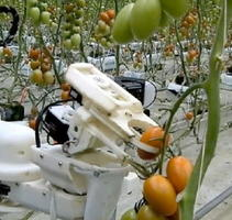 トマトを収穫するパナソニックのロボット(同社提供)