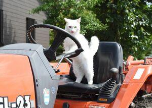 """今、佐賀平野では田植えの真っ最中。""""猫の手も借りたい""""農家の皆さん。にゃんこの手、お貸しします=吉野ヶ里町(小山則幸)"""
