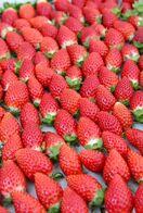 佐賀の新品種「いちごさん」の苗、盗難相次ぐ