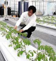 高品質なトマトを生産しようと、特殊なシートを土代わりに用いる「アイメック農法」に挑戦している吉田章記代表=唐津市石志の「Agrish」農場