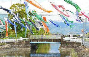 巨勢公民館横の川上に泳ぐ70匹のこいのぼり=佐賀市巨勢町