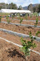 ミカン栽培団地完成 多久市 高品質へ根域制限