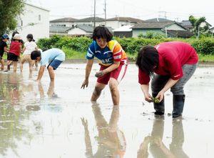 「さがびより」の苗を手植えする参加者=佐賀市木原の日枝神社の神田