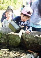 ホタルの幼虫をゆっくり放つ子ども=佐賀市城内