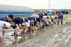 アジア・アフリカ支援米の田植えをする参加者=佐賀市大和町池上