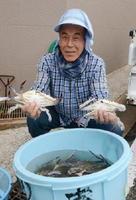水揚げしたばかりの竹崎カニを持つ漁業者=太良町大浦