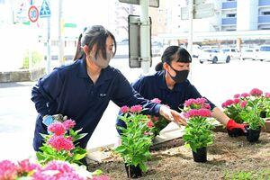 花壇に花を植える高志館高の生徒たち=佐賀市の市役所前公園