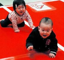 家族の声援を受け、元気にハイハイレースに挑む赤ちゃんたち=佐賀市の佐賀城本丸歴史館