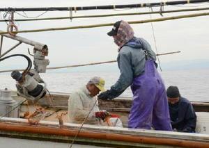 カニが掛かった網を引き上げる漁業者=有明海
