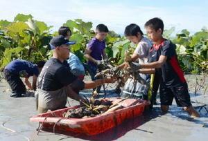 掘り当てたレンコンをボートに集める有明南小の5年生たち=白石町福田