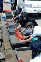 泥を洗いながして生き物を探す高校生=佐賀市の東与賀干潟