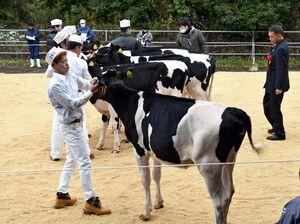 乳用牛35頭が出品され、育成状況を審査員が調べた県ブラック&ホワイトショウ=多久市のJAさが畜産センター