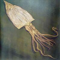 石丸翔子さんのデザイン「squid」(30センチ×30センチ)