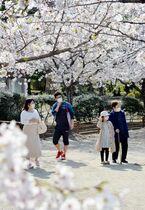 佐賀市で桜満開 マスク姿で憩いの…