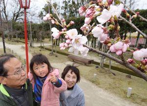咲き始めたソメイヨシノの花を数える女の子=20日午前、佐賀市の神野公園