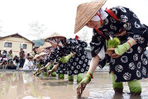 祐徳稲荷神社のお田植え祭で、秋の豊作を願い、苗を植える巫女たち=2017年、鹿島市古枝