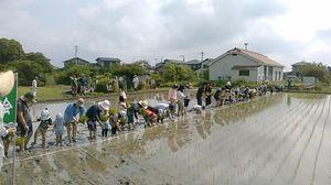 一列似並んで苗を植える参加者=佐賀市巨勢町