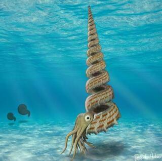 アンモナイト新種の化石と判明