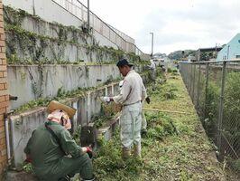 生い茂った草を刈る多久山笠委員会の役員たち=多久市のJR多久駅前