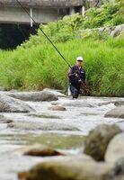 友釣りでアユを狙う男性=15日午前、唐津市七山の玉島川
